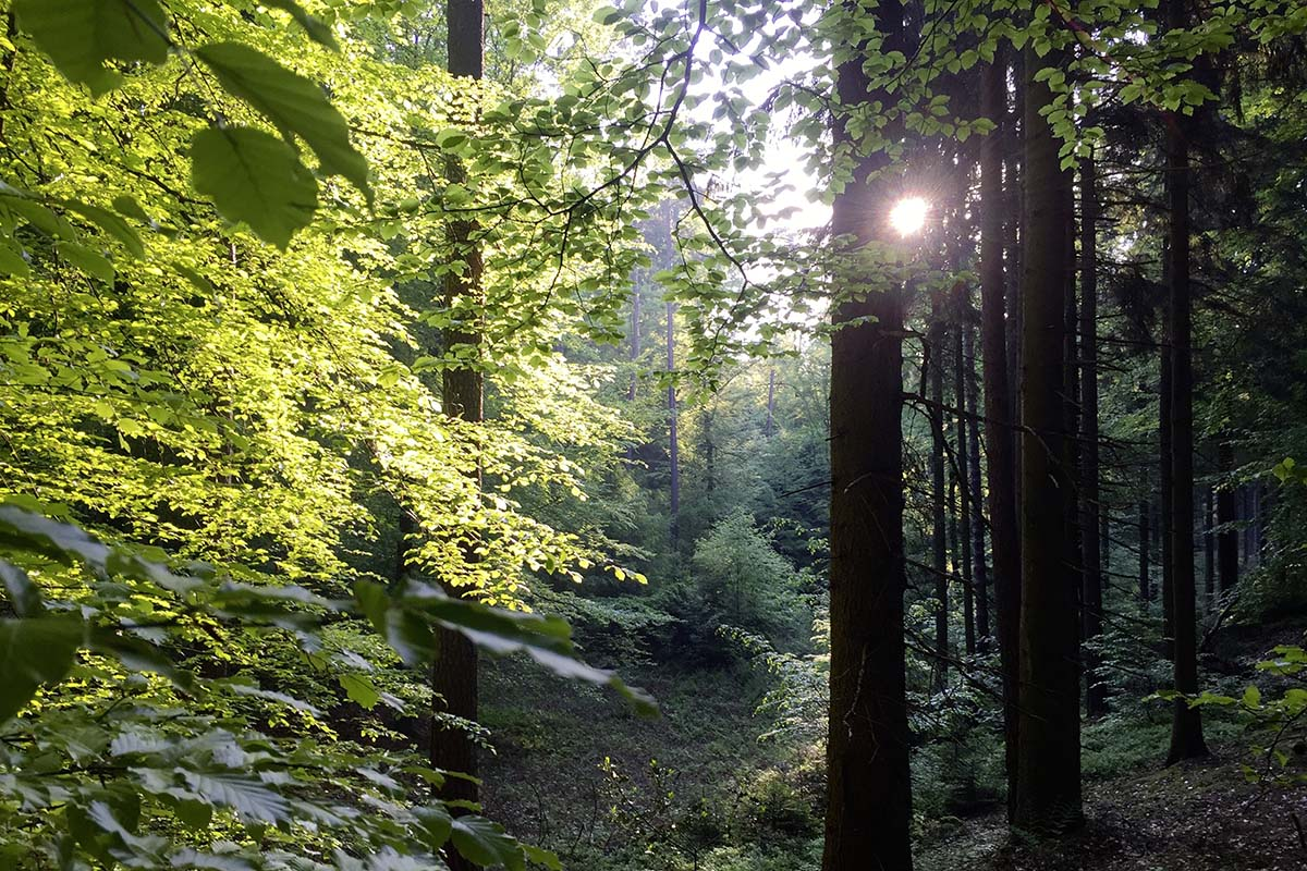 sun shines through trees in a forest along the european hiking trail E1