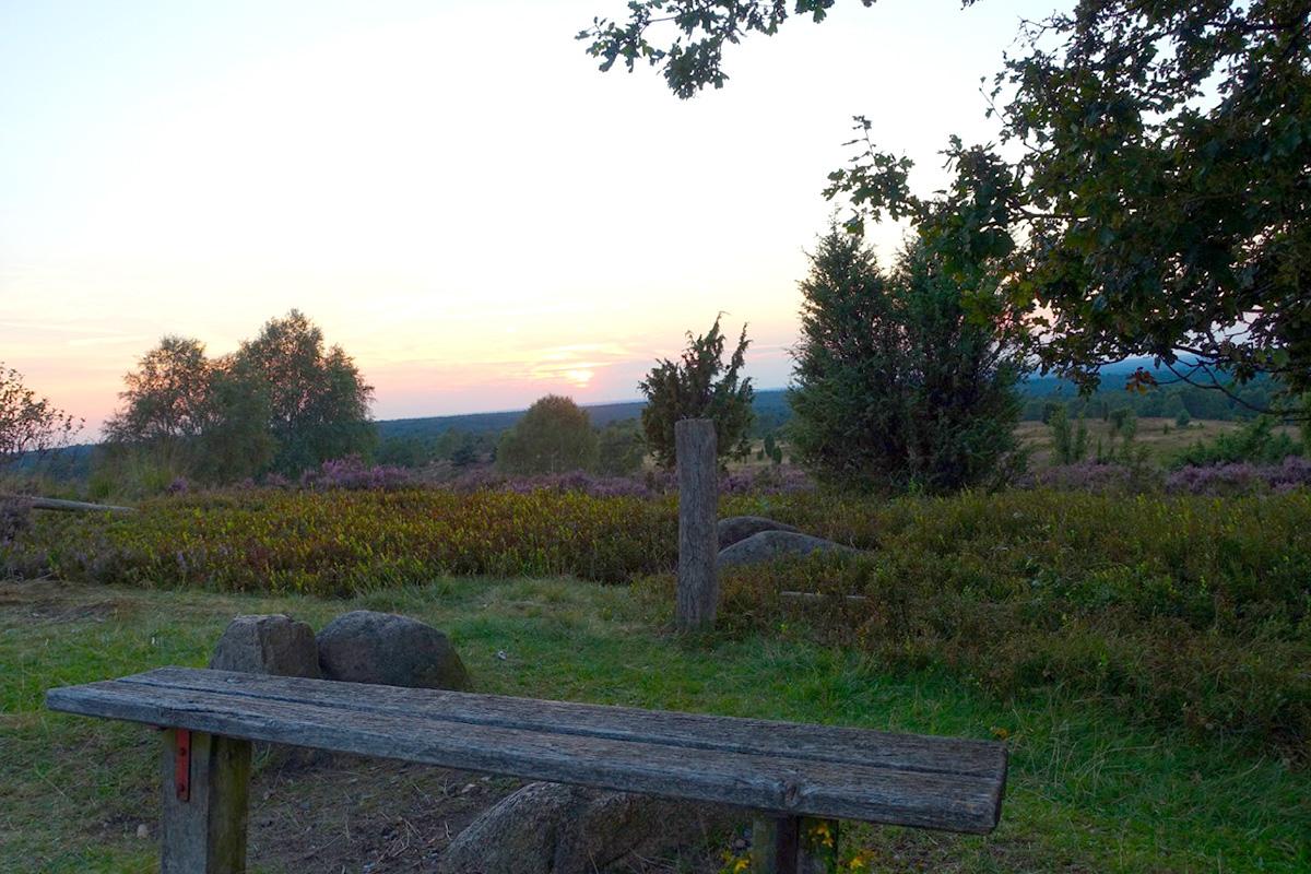Eine leere Bank in der Lüneburger Heide bei Sonnenuntergang